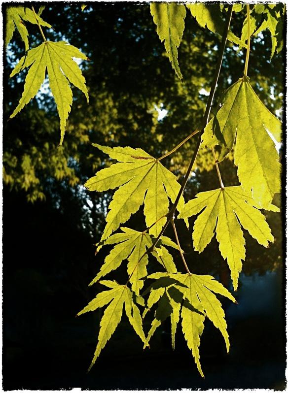 Leafy Green | ©2012 HouseofHank.me