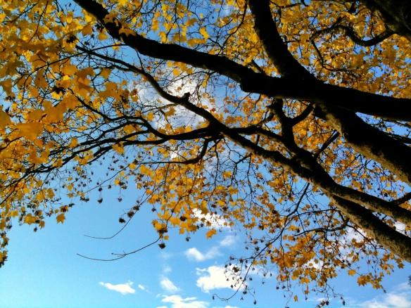 Yellow Tree Green Lake | ©2012 HouseofHank.me