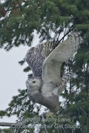 owl 22 jan ltrm-7351