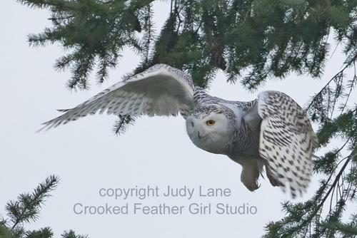 owl 22 jan7355