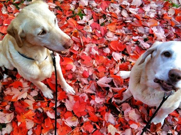Cap & Hank's Autumn | ©2013 HouseofHank.me