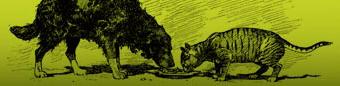 header-dogcat
