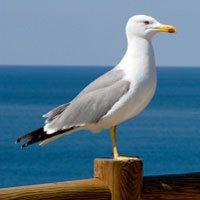 seagull on rail