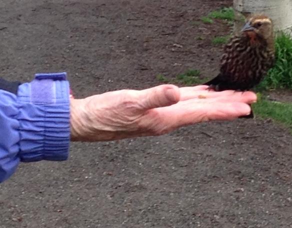 woman feeding birds by hand